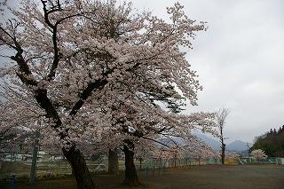 新潟から埼玉S市へ(4月19日)_f0138096_0384789.jpg
