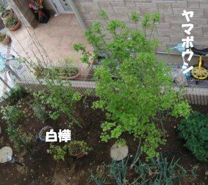 f0068501_2138181.jpg