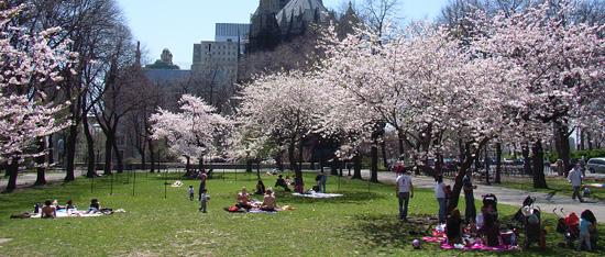 ニューヨークで唯一日本名のついてる公園~サクラパーク_b0007805_12463246.jpg