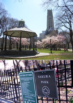ニューヨークで唯一日本名のついてる公園~サクラパーク_b0007805_1247319.jpg