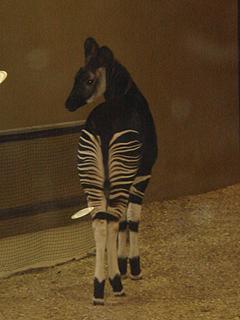 よこはま動物園 ズーラシア_c0025217_0285343.jpg