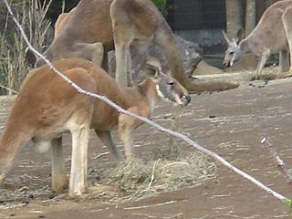 よこはま動物園 ズーラシア_c0025217_06195.jpg