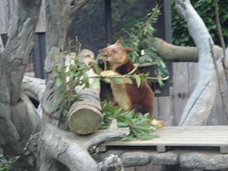 よこはま動物園 ズーラシア_c0025217_07222.jpg
