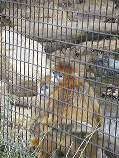 よこはま動物園 ズーラシア_c0025217_074829.jpg