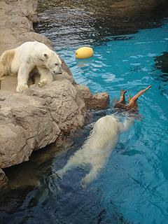 よこはま動物園 ズーラシア_c0025217_23575436.jpg