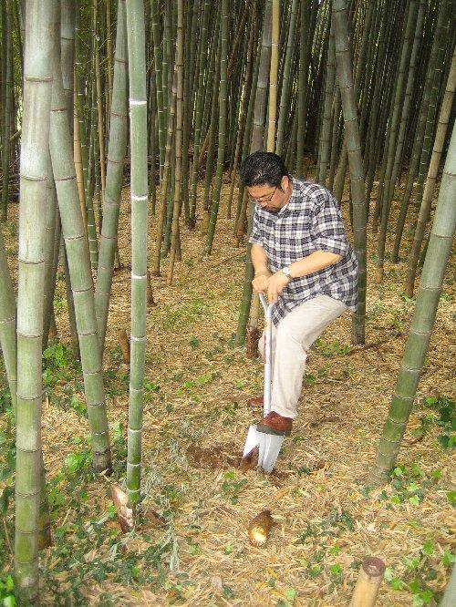 2007 Log Jizo Festival【春】1 恒例の筍掘りです!_c0038619_23351937.jpg
