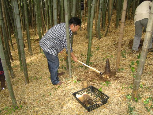 2007 Log Jizo Festival【春】1 恒例の筍掘りです!_c0038619_23353264.jpg