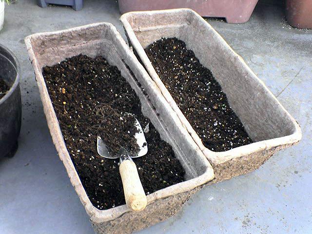 家庭菜園もしくはベランダー_a0016730_19595840.jpg