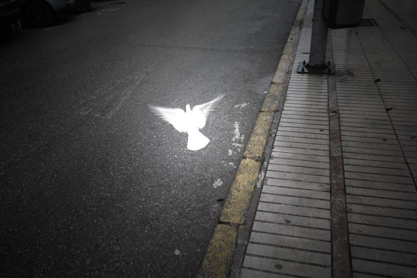 白鳩_e0100152_643155.jpg