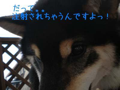 f0118956_024656.jpg