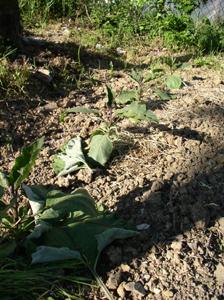 予防農法_f0106597_0372388.jpg