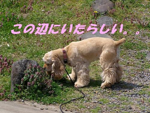 b0067012_235182.jpg