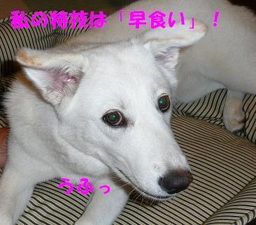 f0121712_1018824.jpg