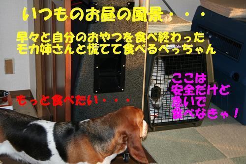 f0121712_106759.jpg