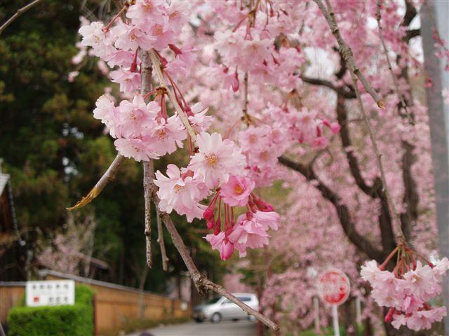2007年:長野、松本、上諏訪_d0077719_81161.jpg