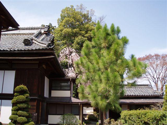 2007年:長野、松本、上諏訪_d0077719_82082.jpg