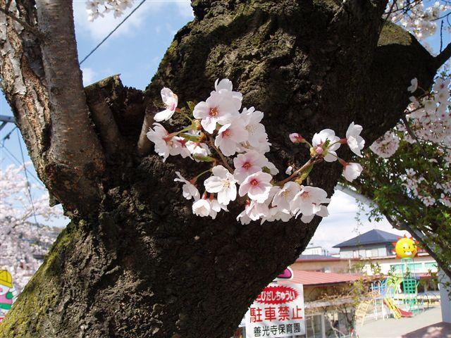 2007年:長野、松本、上諏訪_d0077719_831774.jpg