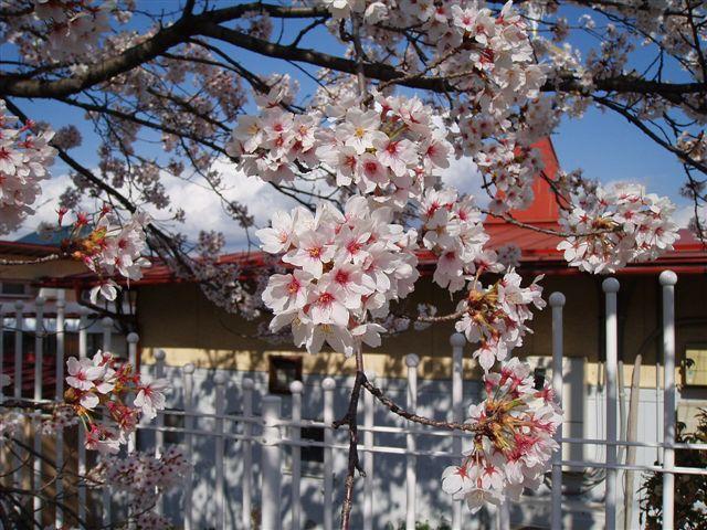 2007年:長野、松本、上諏訪_d0077719_833011.jpg