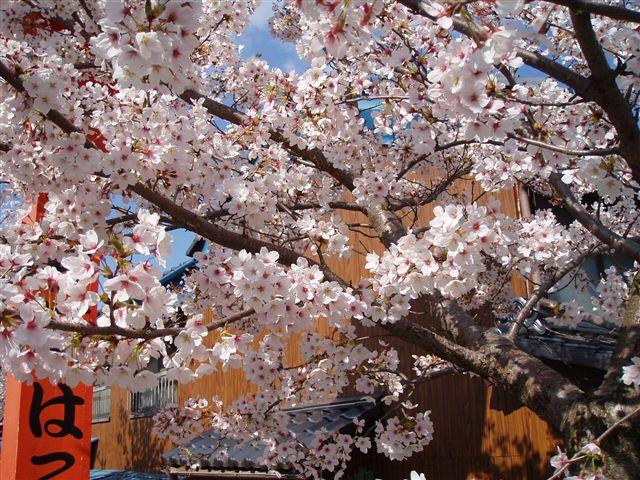 2007年:長野、松本、上諏訪_d0077719_83445.jpg