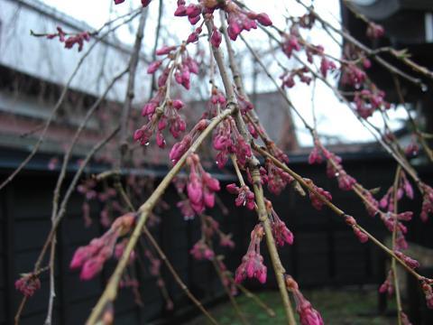 秋田の春~_c0079828_16482783.jpg