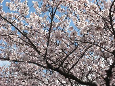 秋田の春~_c0079828_17154385.jpg