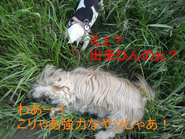 f0053952_10332575.jpg