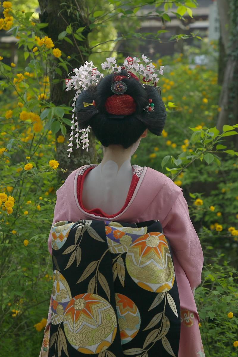 京都 松尾大社 山吹 2_f0021869_1253412.jpg