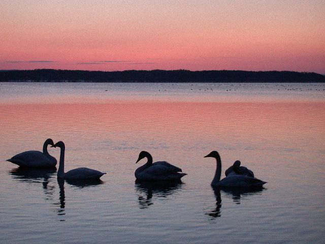 早春の北海道半周紀その3:浜頓別クッチャロ湖の夕焼け_e0100772_23435884.jpg