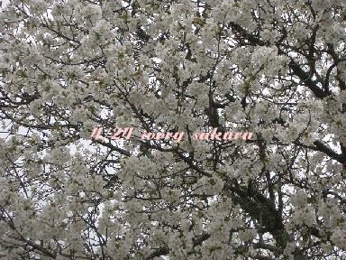 道しるべ_b0094378_19222996.jpg