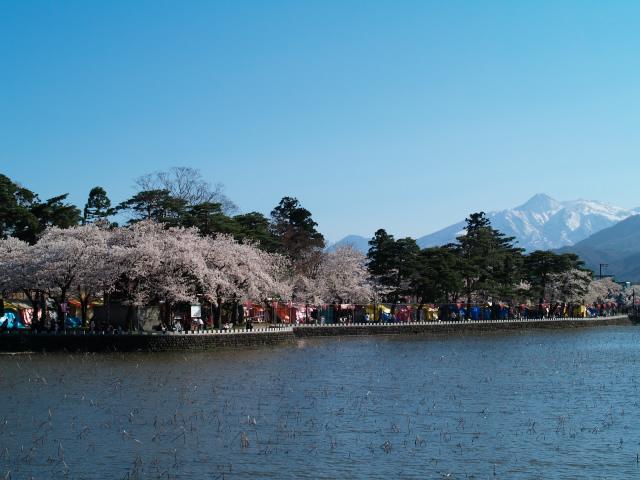 故郷の風景 高田公園の桜1_f0024992_1072581.jpg