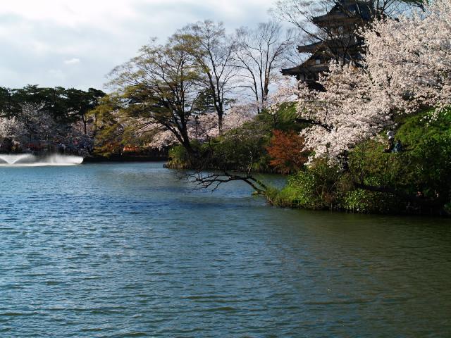 故郷の風景 高田公園の桜1_f0024992_1075011.jpg