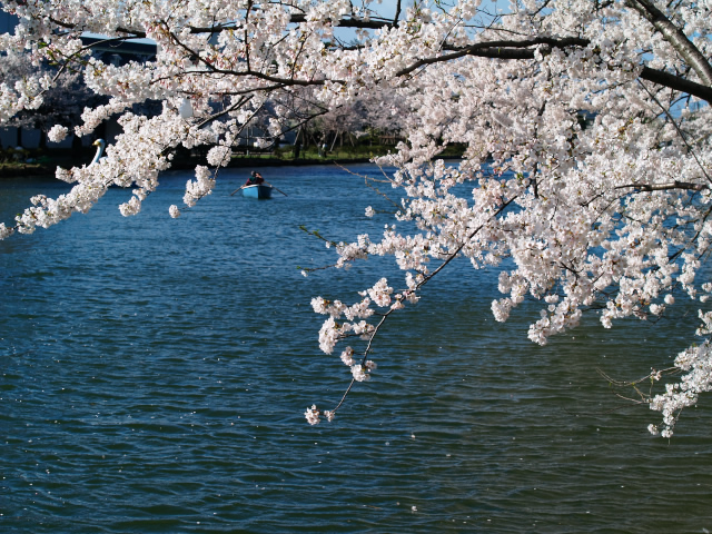 故郷の風景 高田公園の桜1_f0024992_1083128.jpg