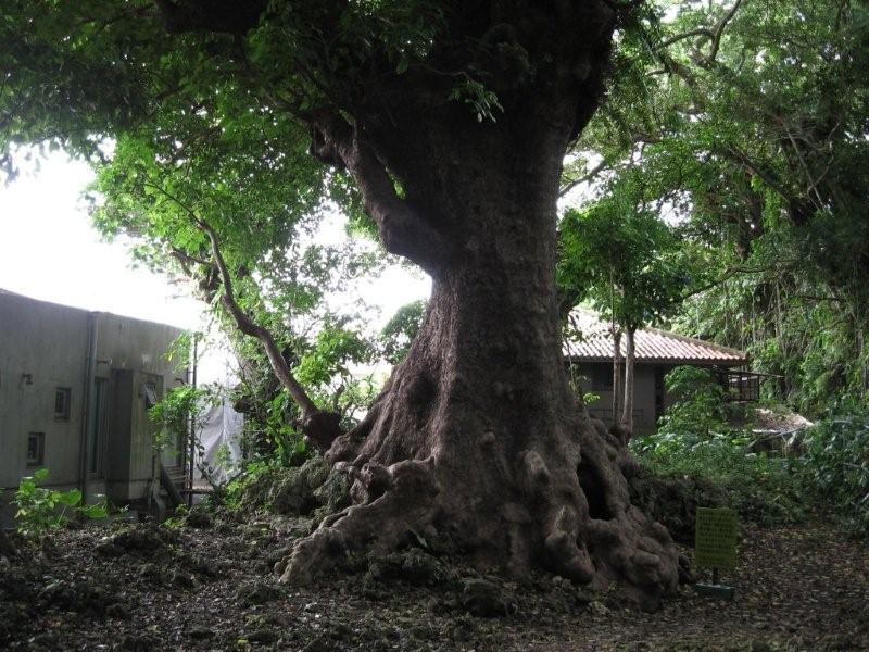 沖縄のHONORの木 NO.25を読んでください_c0102513_1446348.jpg