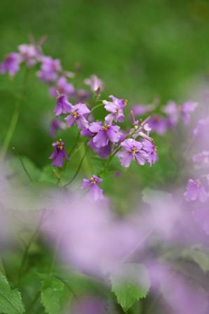 優しいブルー系の草花たち_f0012718_0525182.jpg