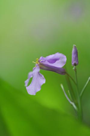 優しいブルー系の草花たち_f0012718_0541530.jpg