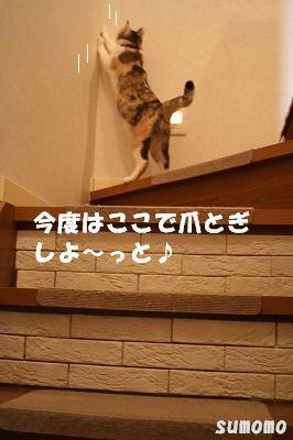f0063729_1103649.jpg