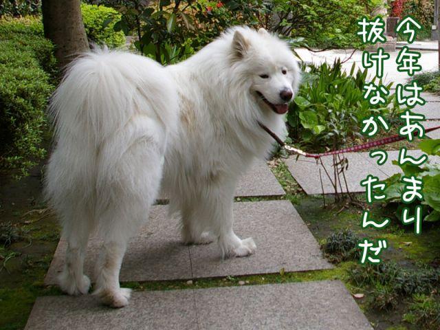 ♪『ヌケヌケ時代』_c0062832_16535730.jpg