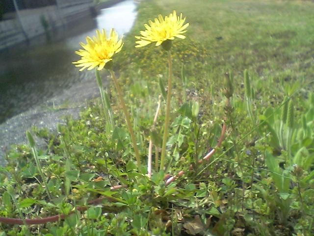 野に咲く花_b0007835_20525949.jpg