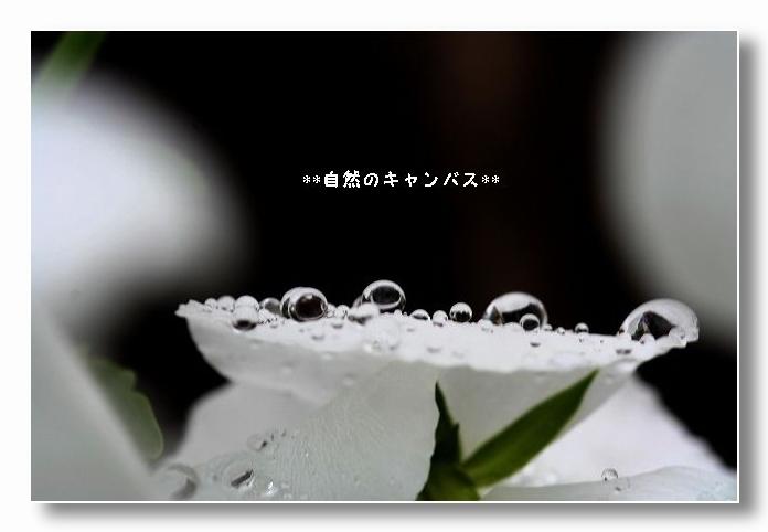 e0052135_18525648.jpg