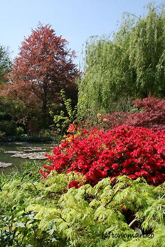 モネの愛した風景、ジヴェルニー_c0024345_635852.jpg