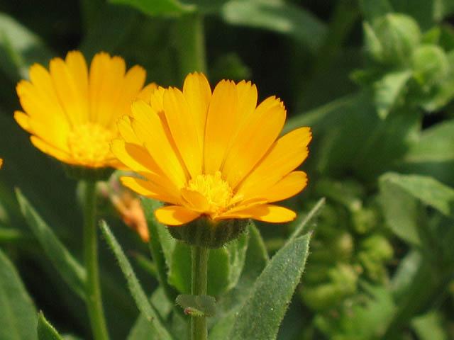 オレンジ色も好き_d0046361_19585557.jpg