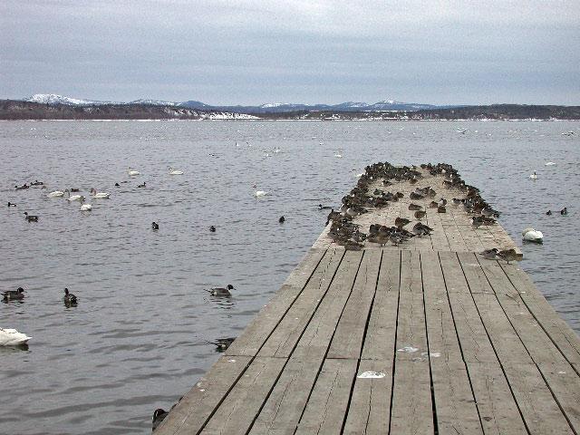 早春の北海道半周紀その4:まだクッチャロ湖_e0100772_23171285.jpg