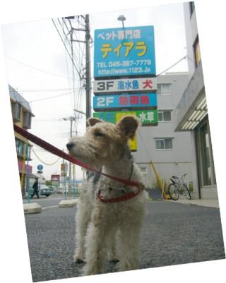 猫のおもちゃがすきな犬_c0070377_2101941.jpg