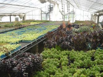 多肉植物_f0127281_0202868.jpg