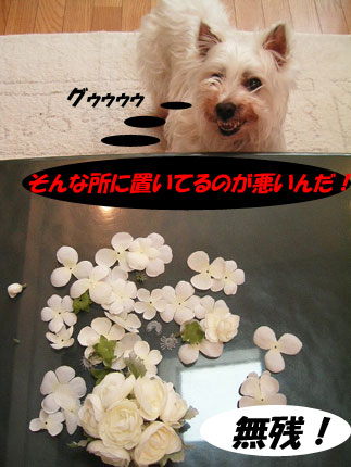 e0066883_1275330.jpg