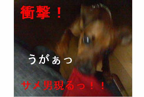 f0123589_12534980.jpg
