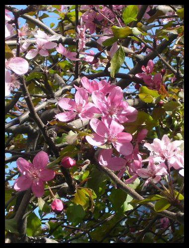 ■街角の花(パリ)_a0008105_6172771.jpg