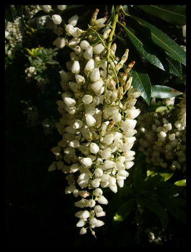 ■街角の花(パリ)_a0008105_6183586.jpg