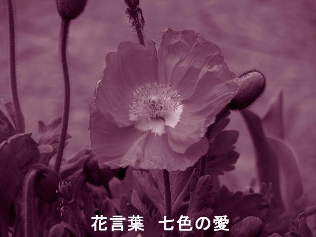 f0099535_2013095.jpg