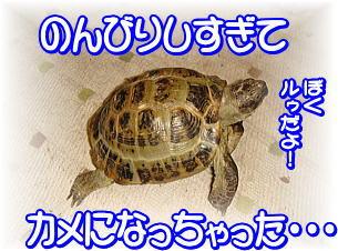 f0011845_23124689.jpg